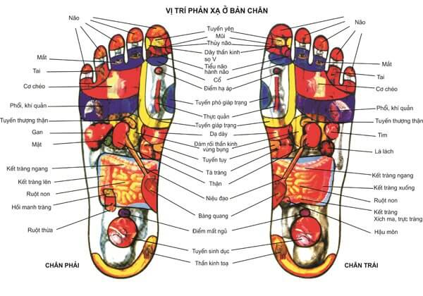 chua-cac-benh-thong-thuong-bang-matxa-an-huyet-long-ban-chan-1